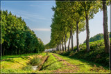 Tree Line Perspective by corngrowth, photography->landscape gallery