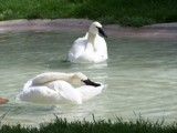 Bath Time by jrasband123, Photography->Birds gallery