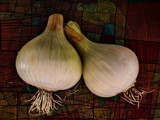 I know my Onions by WTFlack, photography->gardens gallery