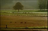 Roe deers in plowed fields (Rework} by Foxfire66, Rework gallery