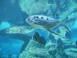 uShaka Resident by aethelrick, Photography->Underwater gallery