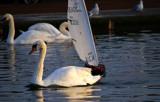 Headline - Marine Near-Miss!! by braces, Photography->Birds gallery