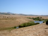 California Grazing by edwinp, Photography->Landscape gallery