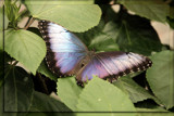 Butterfly Five by Jimbobedsel, Photography->Butterflies gallery