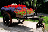 Flowers on wheels by rozem061, Photography->Flowers gallery