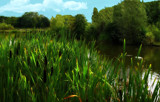 Reed Beds by biffobear, photography->water gallery