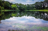 Reflections over Hidden Lake Gardens by stylo, photography->water gallery