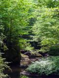 Rock Creek (2) by Pistos, photography->landscape gallery