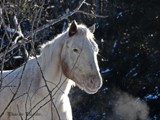 Horse in the frost by picardroe, photography->animals gallery