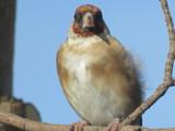 Me pretty! by owldgirl, photography->birds gallery