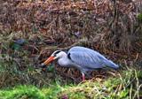 Gotcha by biffobear, photography->birds gallery