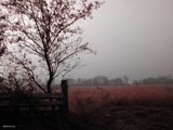 Fog&Field 2 by jojomercury, Photography->Landscape gallery