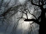 Tree, Silhouetted by kidder, Photography->Nature gallery
