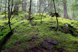 Avalanche Lake Trail: Hobbitville by Nikoneer, photography->landscape gallery