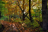 Fall at Thornley.... by biffobear, photography->landscape gallery