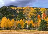 Lockett Meadow by jeenie11, photography->landscape gallery