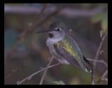 Resolution by garrettparkinson, Photography->Birds gallery