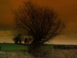 Bush Fire by wingnut4, Photography->Manipulation gallery