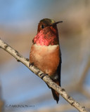 Brilliant by garrettparkinson, photography->birds gallery