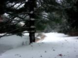 Ambient Snowscape by jojomercury, Photography->Landscape gallery
