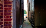 A Shared Alley by casechaser, photography->city gallery