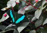 Butterfly Exhibit by tigger3, photography->butterflies gallery